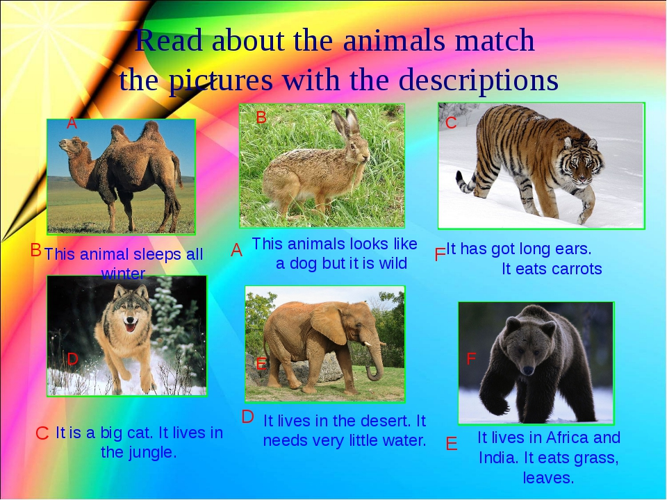 Read about the animals match the pictures with the descriptions This animal...