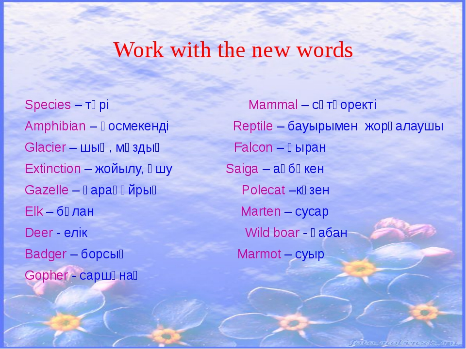 Work with the new words Species – түрі Mammal – сүтқоректі Amphibian – қосмек...