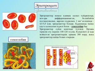 гемоглобин Эритроциттер немесе қанның қызыл түйіршіктері, жоғары дифференциял