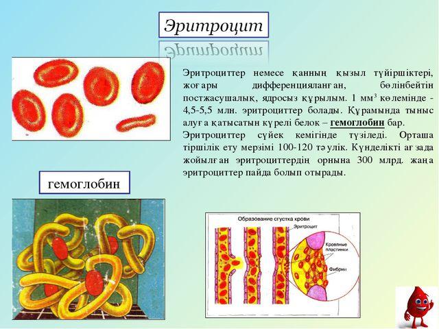 гемоглобин Эритроциттер немесе қанның қызыл түйіршіктері, жоғары дифференциял...