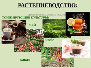 РАСТЕНИЕВОДСТВО: Другие продовольственные культуры ТОНИЗИРУЮЩИЕ КУЛЬТУРЫ: чай