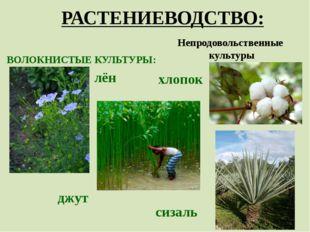 РАСТЕНИЕВОДСТВО: Непродовольственные культуры ВОЛОКНИСТЫЕ КУЛЬТУРЫ: хлопок лё