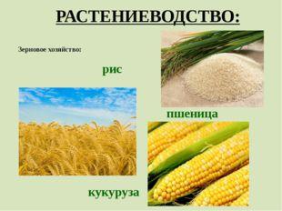 РАСТЕНИЕВОДСТВО: Зерновое хозяйство: рис пшеница кукуруза