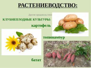 РАСТЕНИЕВОДСТВО: Другие продовольственные культуры КЛУБНЕПЛОДНЫЕ КУЛЬТУРЫ: ка