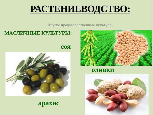 РАСТЕНИЕВОДСТВО: Другие продовольственные культуры МАСЛИЧНЫЕ КУЛЬТУРЫ: соя ол...