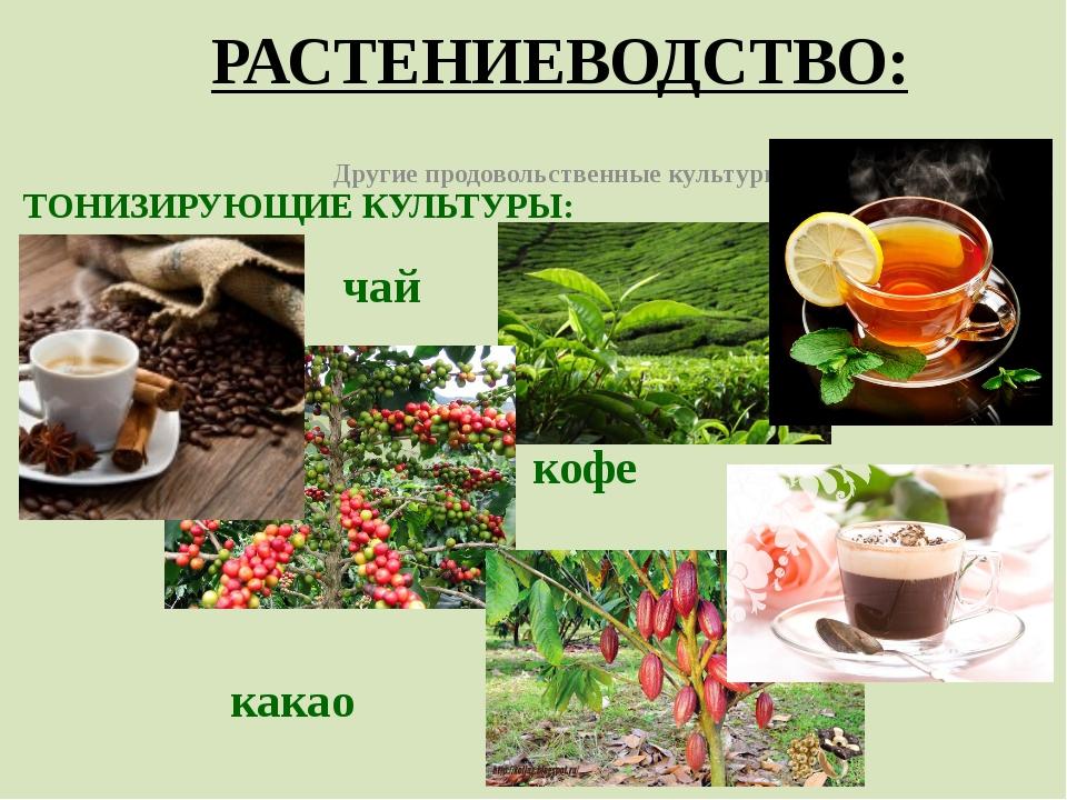РАСТЕНИЕВОДСТВО: Другие продовольственные культуры ТОНИЗИРУЮЩИЕ КУЛЬТУРЫ: чай...