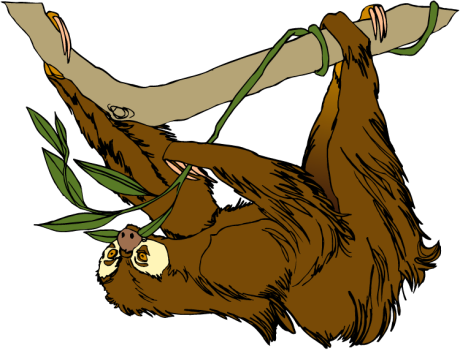 http://www.wildlife-animals.com/clipart/sloth-3.png
