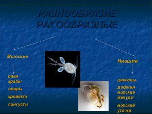 РАЗНООБРАЗИЕ РАКООБРАЗНЫЕ Высшие Низшие раки крабы омары креветки лангусты ци