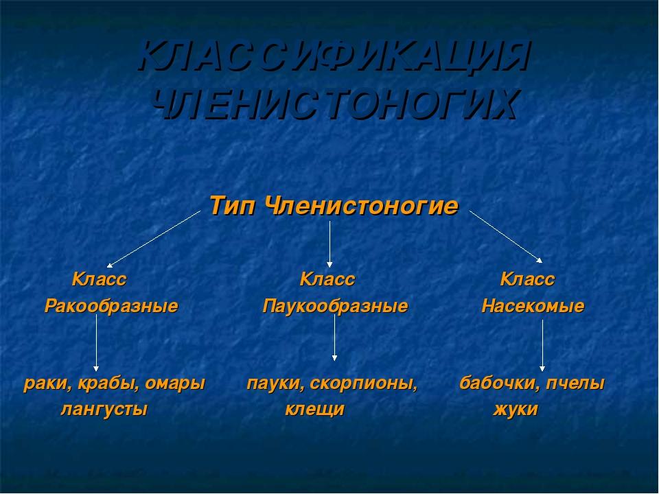 КЛАССИФИКАЦИЯ ЧЛЕНИСТОНОГИХ Тип Членистоногие Класс Класс Класс Ракообразные...