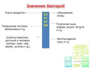 Значение бактерий БАКТЕРИИ Порча продуктов Разрушение построек, механизмов и
