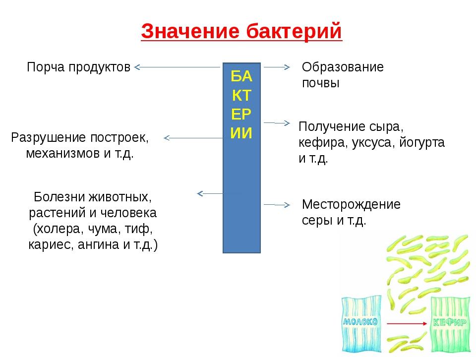 Значение бактерий БАКТЕРИИ Порча продуктов Разрушение построек, механизмов и...