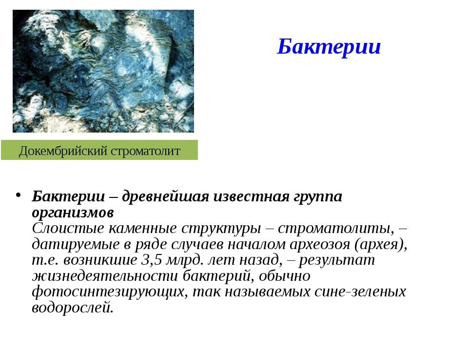 Докембрийский строматолит Бактерии – древнейшая известная группа организмов С...
