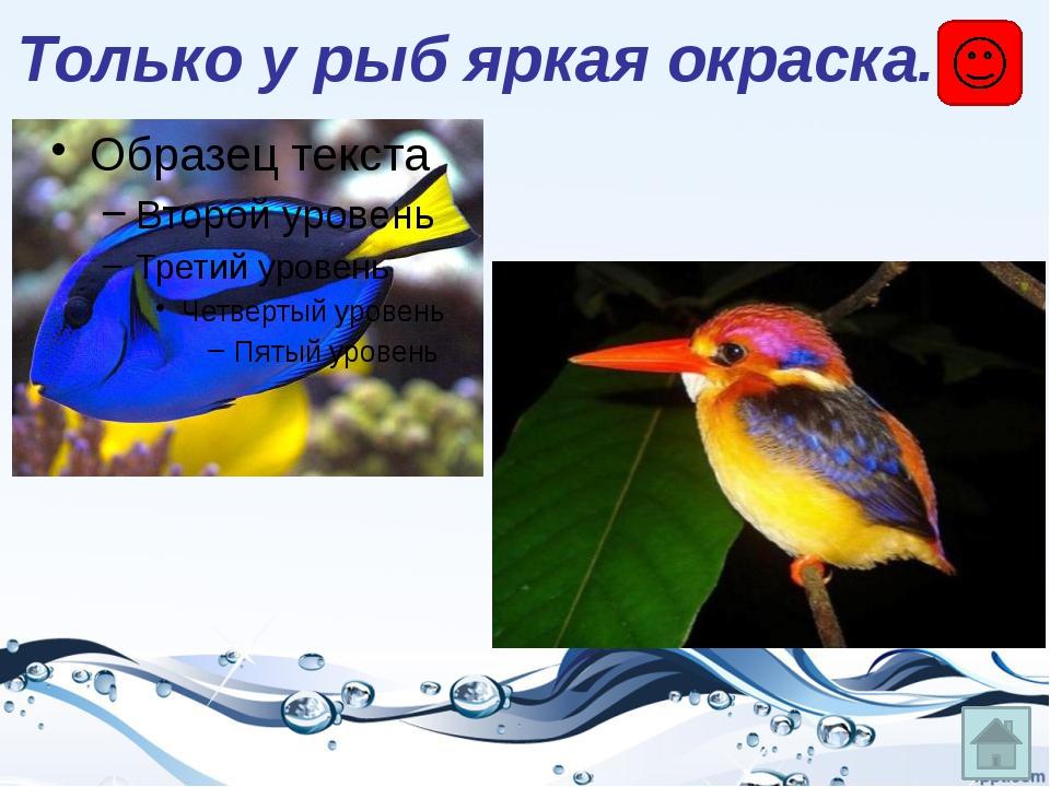 Только у рыб яркая окраска.