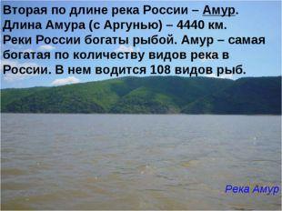 Вторая по длине река России – Амур. Длина Амура (с Аргунью) – 4440 км. Реки Р