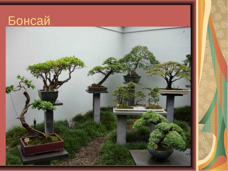 Бонсай Бонса́й («выращенное в подносе»)— искусство выращивания точной копии...