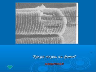 Какая ткань на фото? мышечная