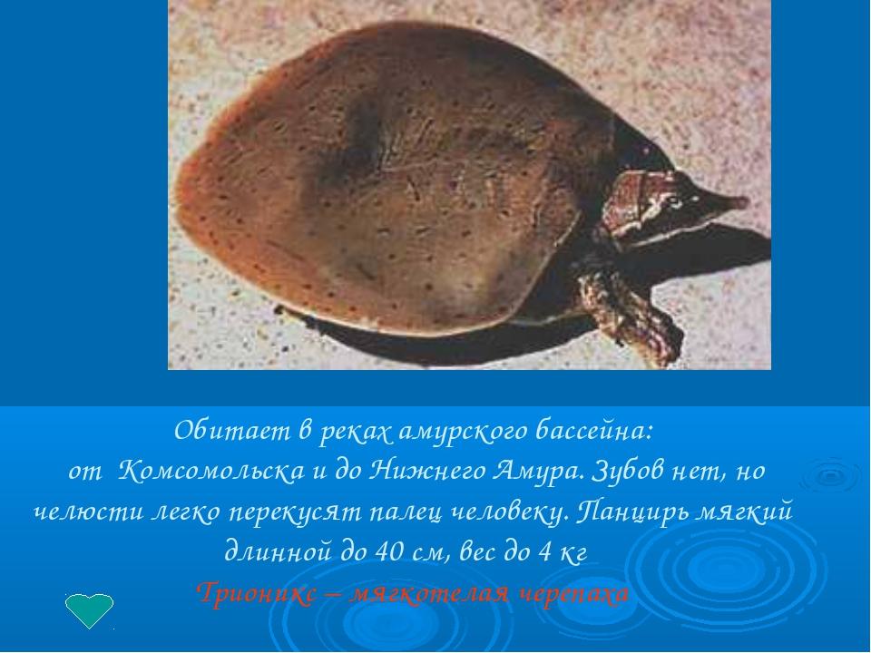 Обитает в реках амурского бассейна: от Комсомольска и до Нижнего Амура. Зубо...