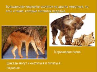 Большинство хищников охотятся на других животных, но есть и такие, которые пи