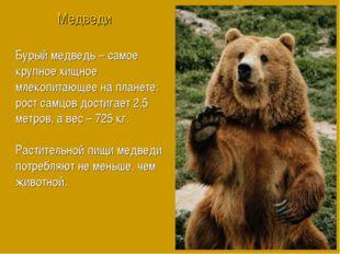 Бурый медведь – самое крупное хищное млекопитающее на планете: рост самцов до