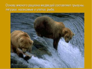 Основу мясного рациона медведей составляют грызуны, лягушки, насекомые и улит