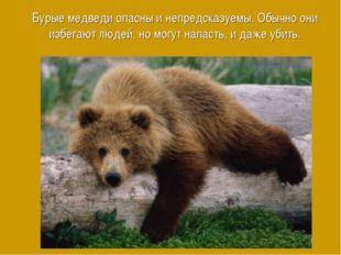 Бурые медведи опасны и непредсказуемы. Обычно они избегают людей, но могут на