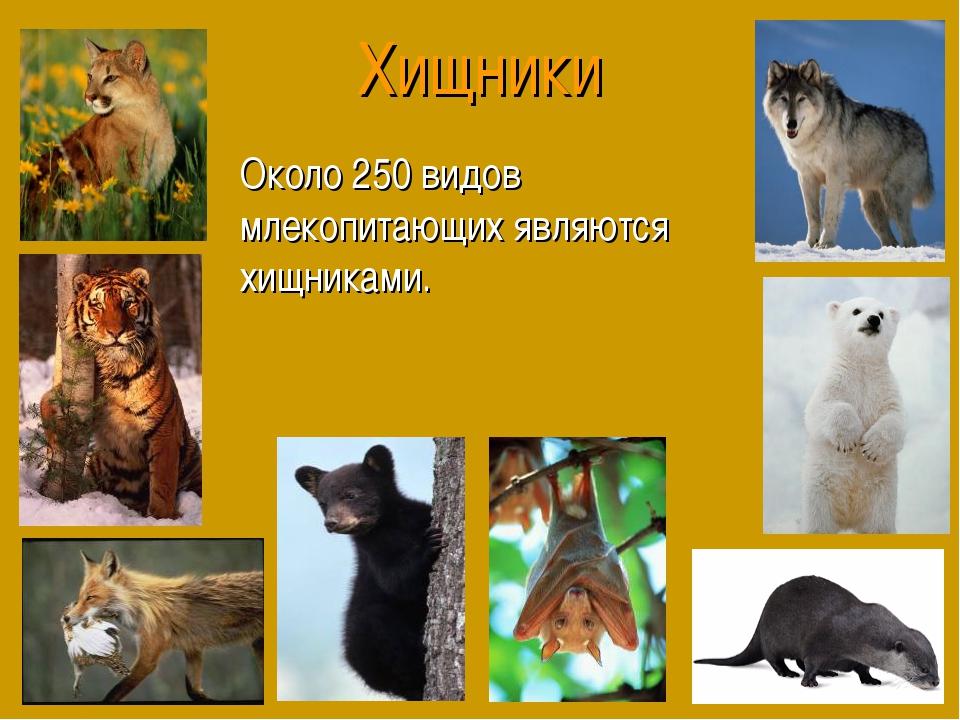 Хищники Около 250 видов млекопитающих являются хищниками.