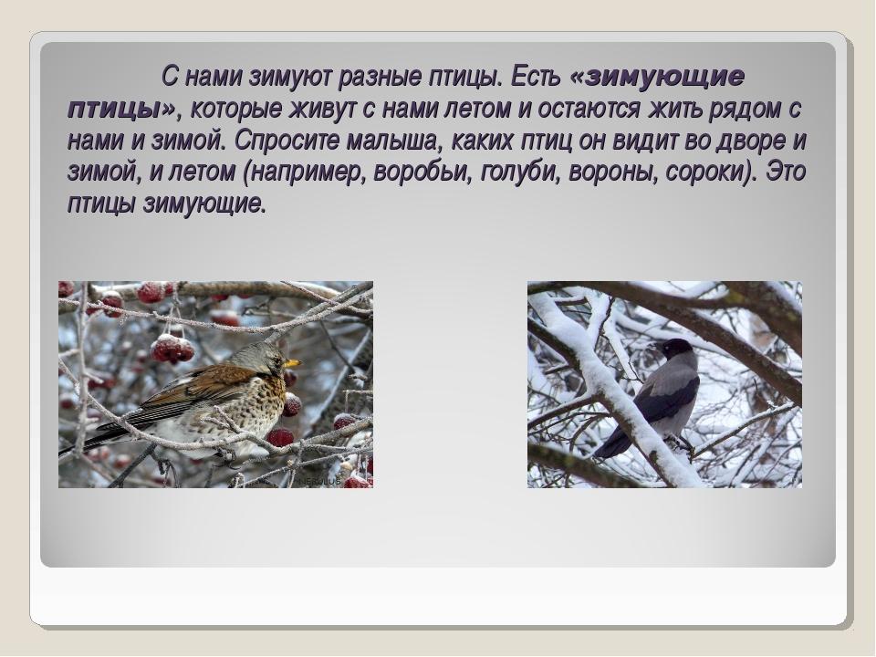 С нами зимуют разные птицы. Есть «зимующие птицы», которые живут с нами лето...
