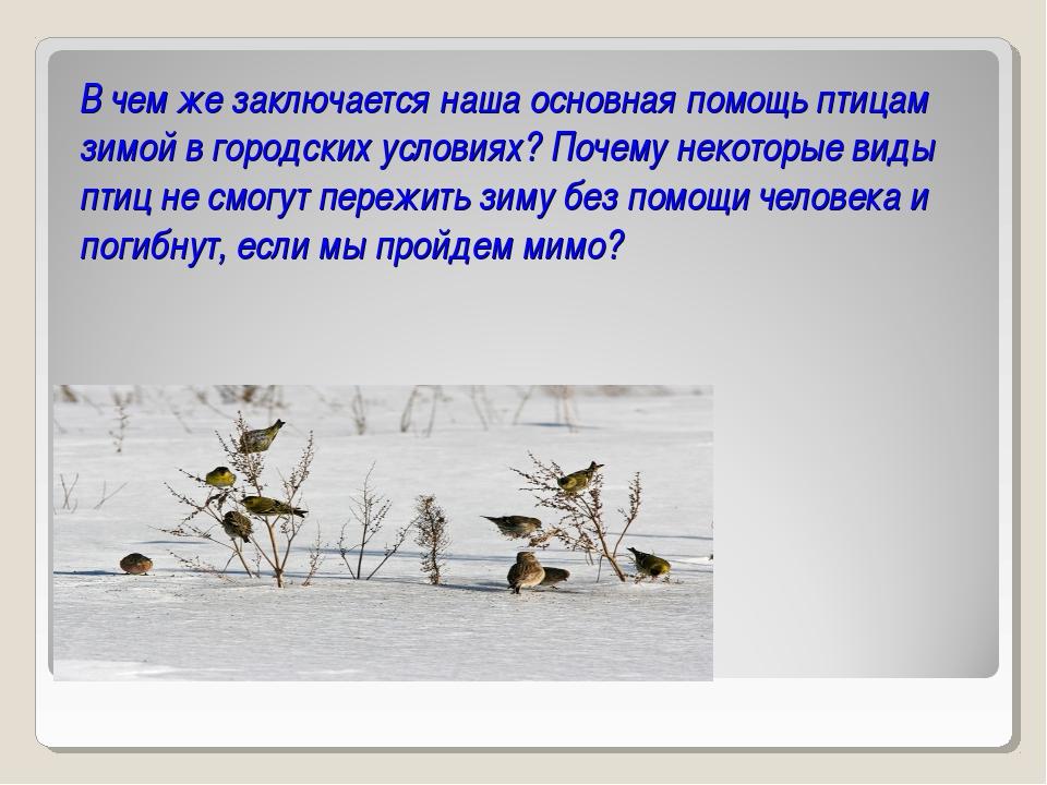 В чем же заключается наша основная помощь птицам зимой в городских условиях?...