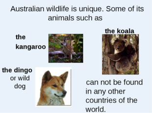 Australian wildlife is unique. Some of its animals such as the kangaroo the k