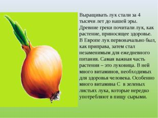 Выращивать лук стали за 4 тысячи лет до нашей эры. Древние греки почитали лук
