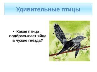Удивительные птицы. Какая птица подбрасывает яйца в чужие гнёзда? Удивительны