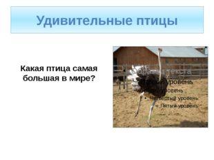 Какая птица самая большая в мире? Удивительные птицы