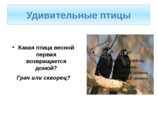 Какая птица весной первая возвращается домой? Грач или скворец? Удивительные