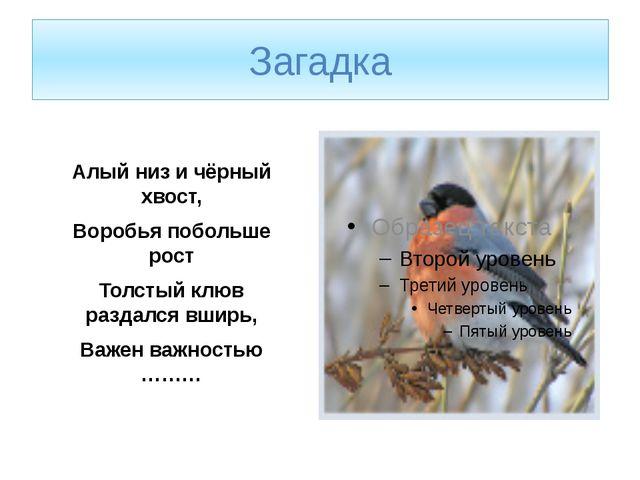 Загадка Алый низ и чёрный хвост, Воробья побольше рост Толстый клюв раздался...