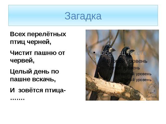 Загадка Всех перелётных птиц черней, Чистит пашню от червей, Целый день по па...