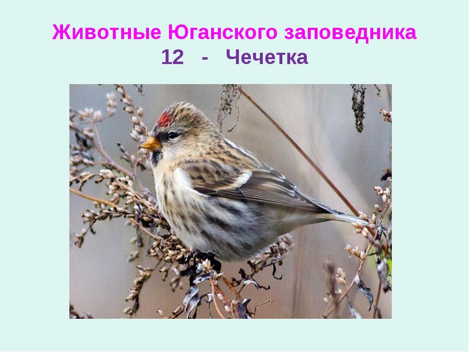 Животные Юганского заповедника 12 - Чечетка