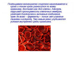 Поглощаемое многократно спиртное накапливается в крови и током крови разносит
