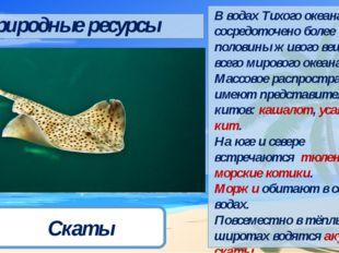 Кашалот Усатый кит Тюлень Морской котик Морж Акулы Скаты Природные ресурсы В