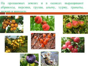 На орошаемых землях и в оазисах выращивают абрикосы, персики, груши, алычу, х