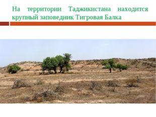 На территории Таджикистана находится крупный заповедник Тигровая Балка