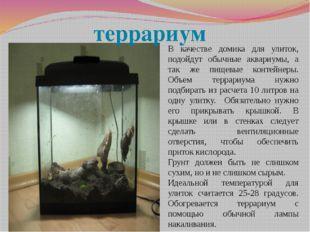 В качестве домика для улиток, подойдут обычные аквариумы, а так же пищевые ко