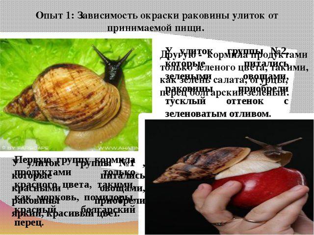 Опыт 1: Зависимость окраски раковины улиток от принимаемой пищи. Первую групп...