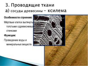 Особенности строения: Мёртвые клетки вытянуты, с толстыми одревесневшими стен