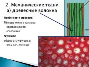 Особенности строения: Мёртвые клетки с толстыми одревесневшими оболочками Фун