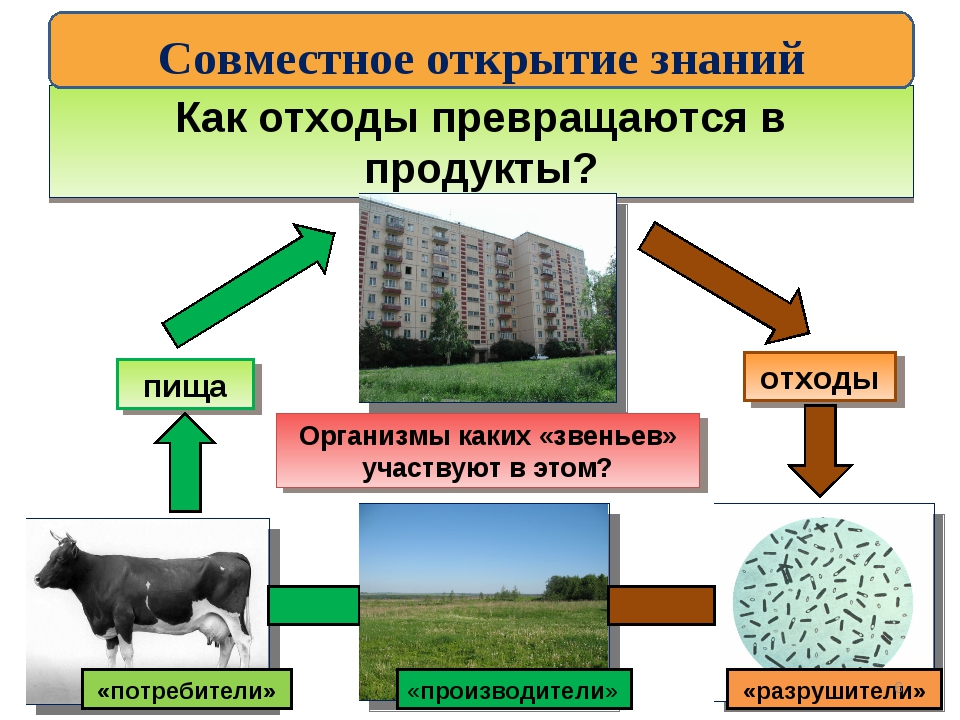 Как отходы превращаются в продукты? отходы пища Организмы каких «звеньев» уча...