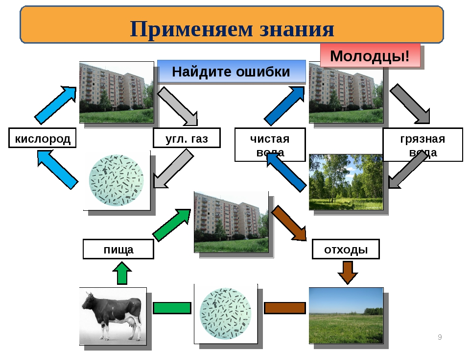 Найдите ошибки кислород угл. газ чистая вода грязная вода отходы пища Применя...