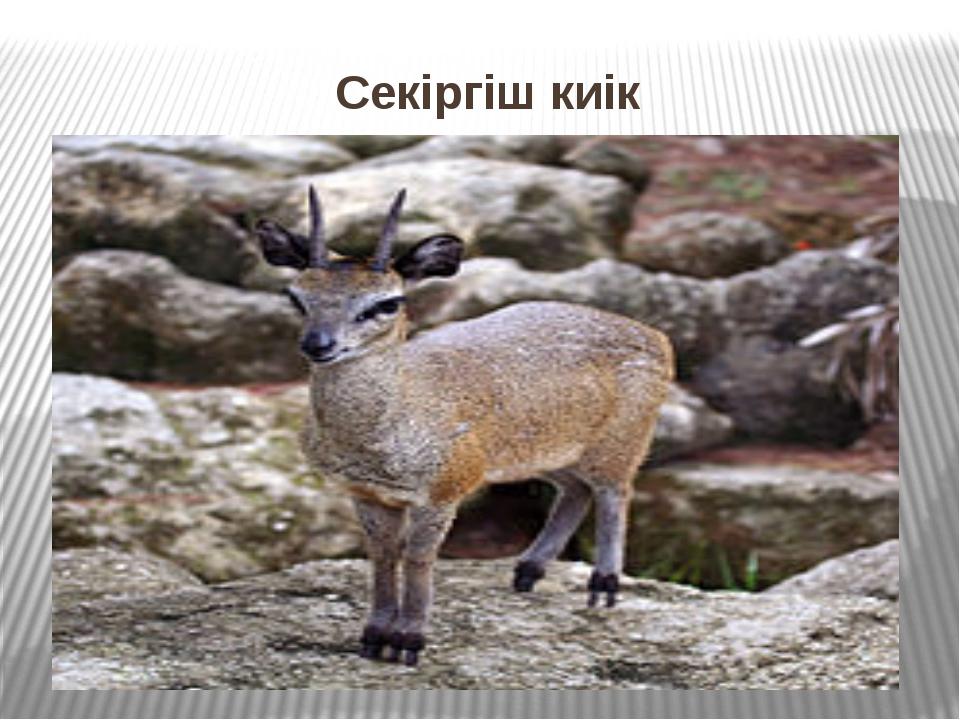 Секіргіш киік Секіргіш киік