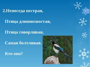 2.Непоседа пестрая, Птица длиннохвостая, Птица говорливая, Самая болтливая. К