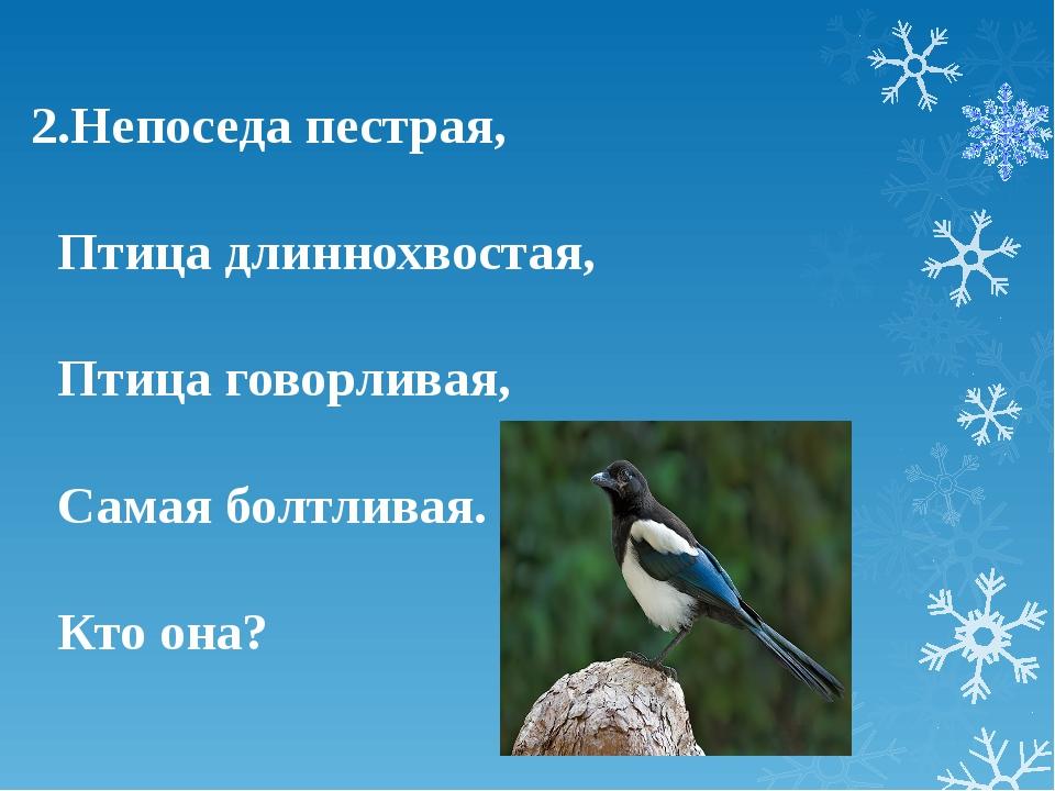 2.Непоседа пестрая, Птица длиннохвостая, Птица говорливая, Самая болтливая. К...