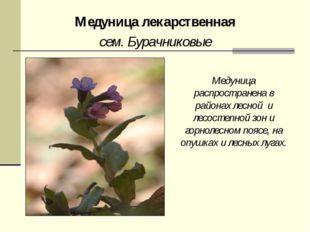 Медуница лекарственная сем. Бурачниковые Медуница распространена в районах ле